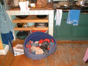 The AGA cooker always had conveyed that same homely feel with the dog in front of it